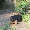 Wyn-Fiete 7 Wochen alt