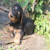 Wyn - Fiete 7 Wochen alt